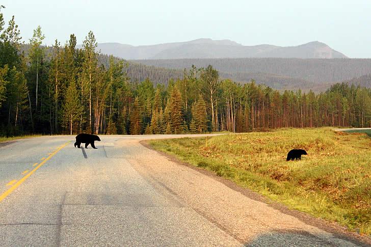 2013 Alaska Highway Road Conditions